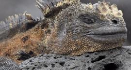 Podróże Dalekie I Bliskie - Ekwador I Galapagos