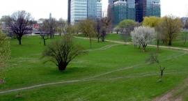 Park Zachodni – wycinają żeby sadzić