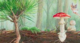 Dobre grzyby (mikoryza) dla drzew Pola Mokotowskiego (nr 658)