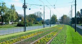 Zielone torowiska wzdłuż Filtrowej i Nowowiejskiej - eksperyment (nr 657)