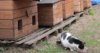 Pomóżmy kotom wolno żyjącym