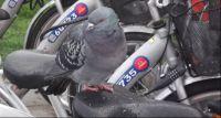 Rowerzyści kochają przyrodę