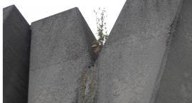 Pomnik Barykady Września  na tydzień przed świętem .