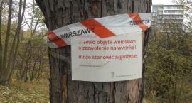 Czy na Instalatorów drzewa uległy epidemii?