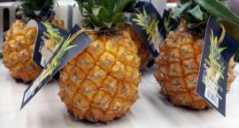 Egzotyczna zupa z ananasa