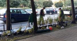 Ulica Białobrzeska gra w zielone