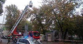 Drzewo zagrażało dzieciom i przechodniom