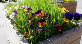 Piknik ogrodników spod Skrzydeł