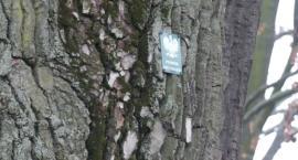 Drzewa a tym samym zdrowie mieszkańców TBS-u można lepiej chronić