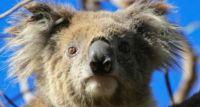 Okiełznana dzikość Australii - spotkanie podróżnicze