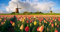 Czy Niderlandy to wciąż sery, tulipany i wiatraki?