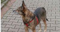 Szukamy psa Karo