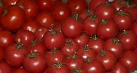 Pomidorowy świat