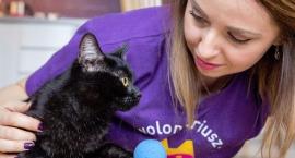 Wolontariusze dla kotów poszukiwani