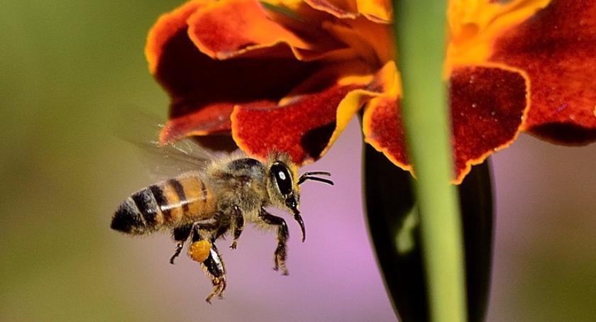 Kamil Baj hoduje pszczoły na dachu Galerii Mokotów i produkuje bardzo dobry miód