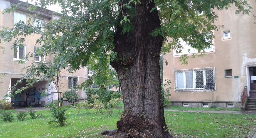 O czym szumią drzewa na Mokotowie? Dziś (10 października br.) w Big Book Cafe przy ul. Dąbrowskiego 81