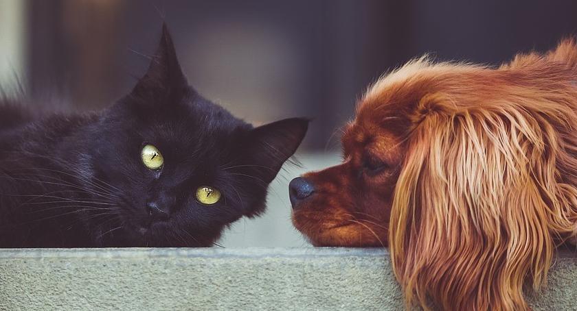 Zaczipuj BEZPŁATNIE swego psa lub kota, zwłaszcza jak jedziesz z nim na wakacje…