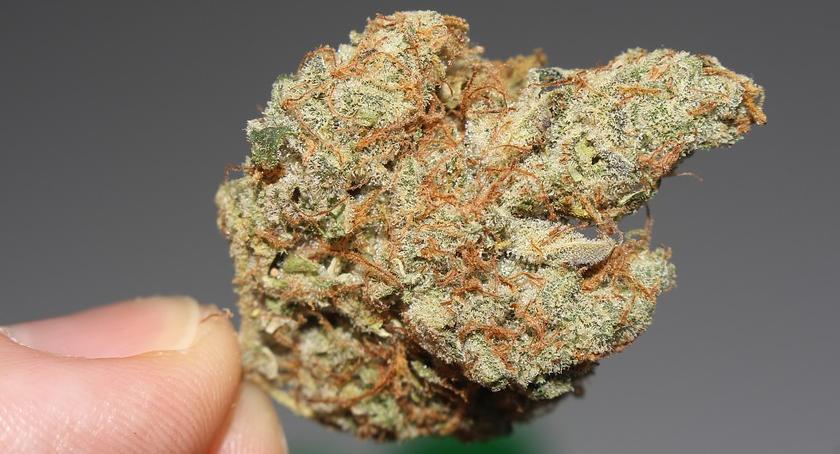Ojciec i syn w jednym stali domu… uprawiając marihuanę jako majeranek!
