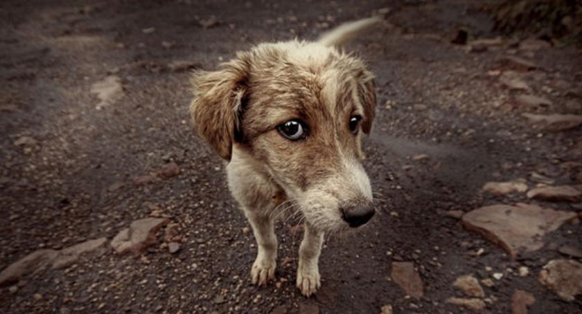 Problemy, Twoja mała pomoc może stać bezdomnego zwierzęta krokiem życie - zdjęcie, fotografia