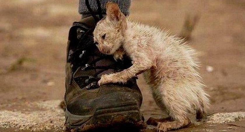 Problemy, więcej poznaję ludzi bardziej kocham zwierząt - zdjęcie, fotografia
