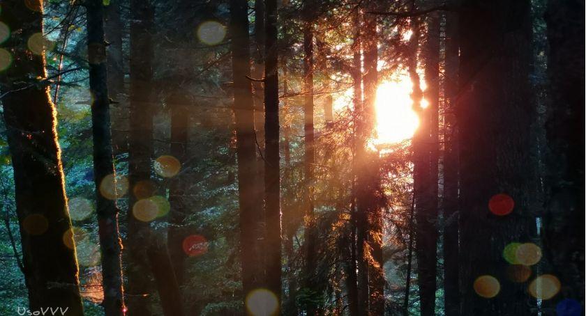 Felietony, jesieni cienistym dachem siądź przebywać chciej Przesilenie jesienne - zdjęcie, fotografia