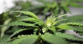 Kolejni dilerzy narkotykowi zatrzymani na Mokotowie i… posiedzą z 10 lat
