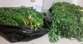 Plantacja marihuany w jednym z mieszkań na Mokotowie została zlikwidowana!