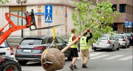 Mokotów za Puszczą Białowieską, przeciw wycince drzew – z drzewem na ramionach