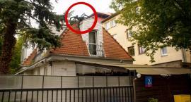Czarny pająk strzeże domku z czerwonym dachem przy ul. Augusta Locci 2A przed zakusami władz miasta?