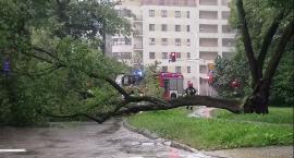 Na ul. Karczocha na mokotowskich Stegnach odłamany konar drzewa zatarasował jezdnię