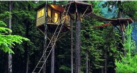 Czy w Forcie Mokotów powstanie na drzewach Chatka Off – bez internetu, komórek i telewizora?