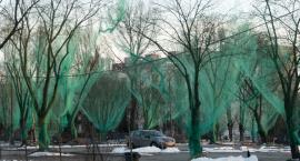 Przy ul. Mangalia drzewa stoją otulone w kolorowe kokony i… dobrze im z tym?