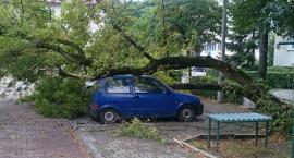 Na ul. Powsińskiej nadpróchniałe stare drzewo zwaliło się na stojące pod nim samochody