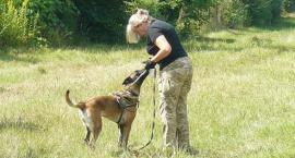 Z OSTATNIEJ CHWILI: pies tropiący wskazuje ślady pytona, a weterynarz rozpoznaje jego odchody
