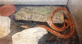 Wąż ujęty! Tyle że nie nad Wisłą, a na Mokotowskiej w prywatnym mieszkaniu…