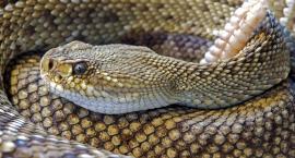 Uwaga mieszkańcy Mokotowa! Jest nowy wąż. Czy może przepłynąć z Wawra do nas? Może…