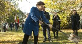 Wybitne Polki upamiętnione nowymi drzewami w parku Pole Mokotowskie