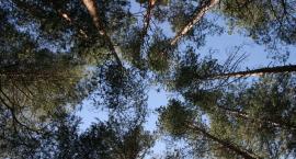 Mapa Koron Drzew powstaje na Mokotowie. O co chodzi? Jesteśmy wyjątkowi?