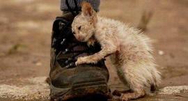 Im więcej poznaję ludzi, tym bardziej kocham zwierząt