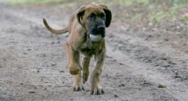 Psi raj na Mokotowie, z łyżką dziegciu, żeby nie było za słodko