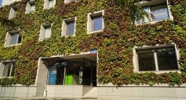 Zielona ściana na Mokotowie przy ul. Krasickiego – pionierskie rozwiązanie