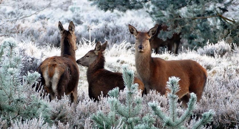 Felietony, Ferie zimowe kiedy gdzie - zdjęcie, fotografia