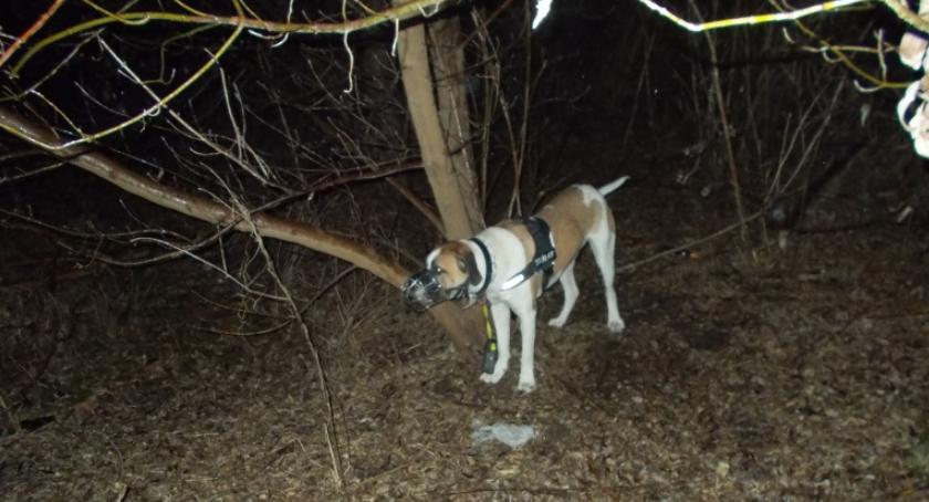 Interwencja, Zostawił przywiązanego drzewa - zdjęcie, fotografia