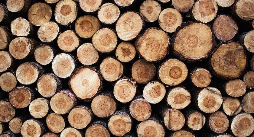 Komunikaty i ogłoszenia, mieszkańców Radomia sprawie wycinki drzew - zdjęcie, fotografia