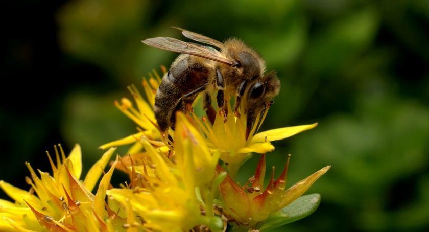 Rozrywka, Warsztaty pszczelarskie rodzinie - zdjęcie, fotografia
