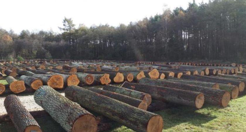 Informacje z Radomia i okolic , Państwowe sprzedają drewno - zdjęcie, fotografia