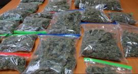 Policjanci zlikwidowali profesjonalną hodowlę marihuany