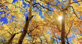 Wraca piękna polska złota jesień! A to wszystko dzięki Ophelii