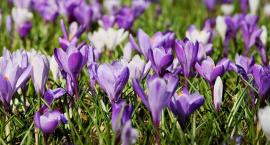 Dzień dobry, wiosno! Chłodno, ale pogodnie