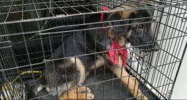 Wyprowadzili się i porzucili psa pod blokiem